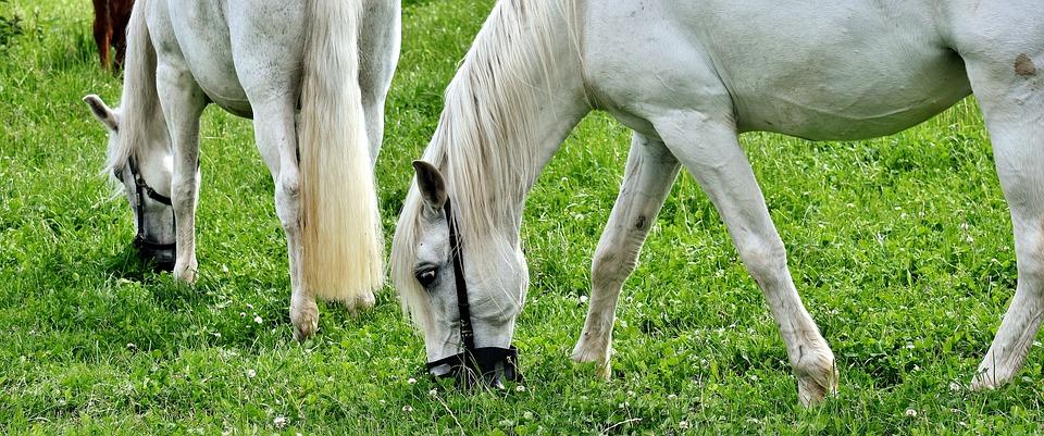 Mold, Horses, Pasture, Animal, Coupling, Grazing