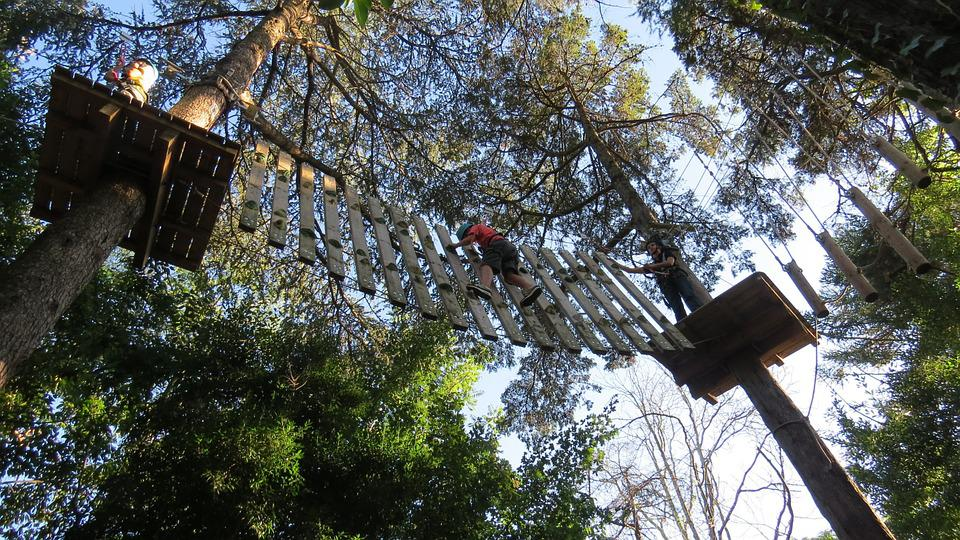 Canopy Tours, Adventure, Courage, Heights, Nature