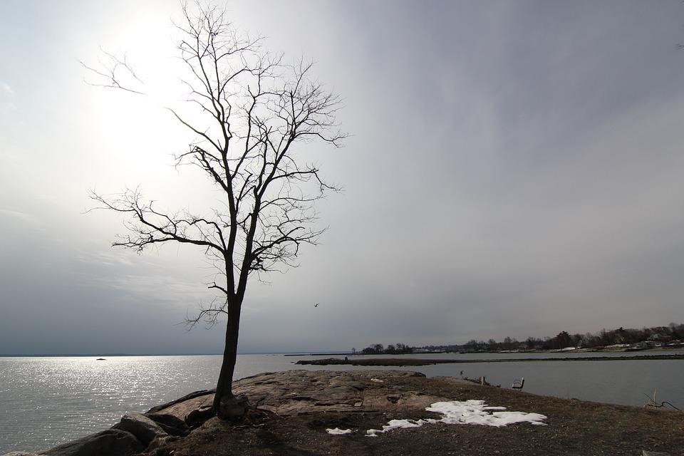 Solitary Tree, Winter View, Winter, Cove Island