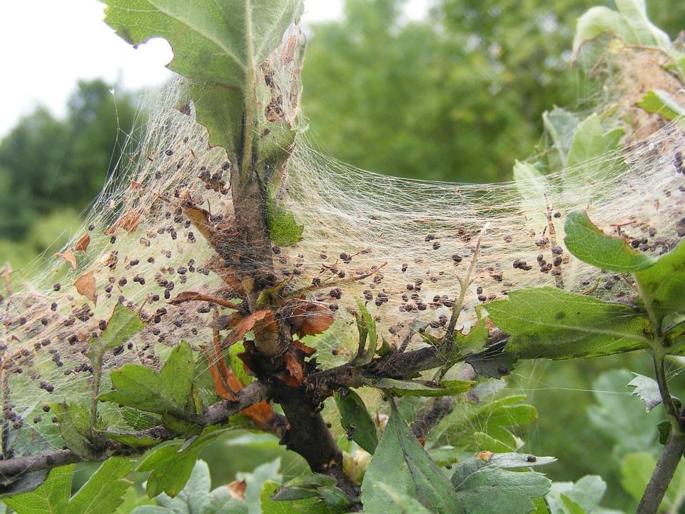 Covered, Fabric, Shrub, Spider, Swirls, Web, Nature