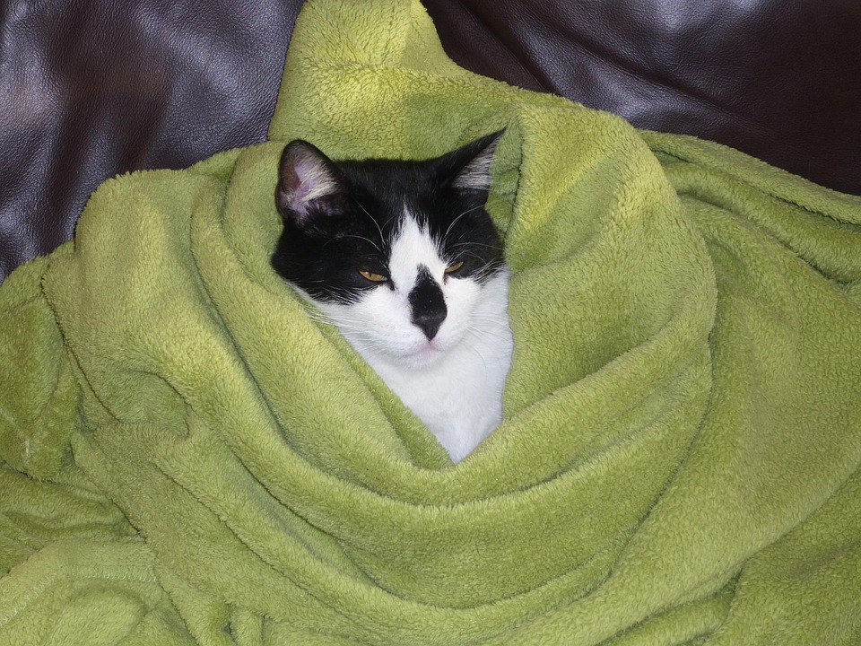 Cat, Pet, Animal, Adidas, Funny, Domestic Cat, Covered