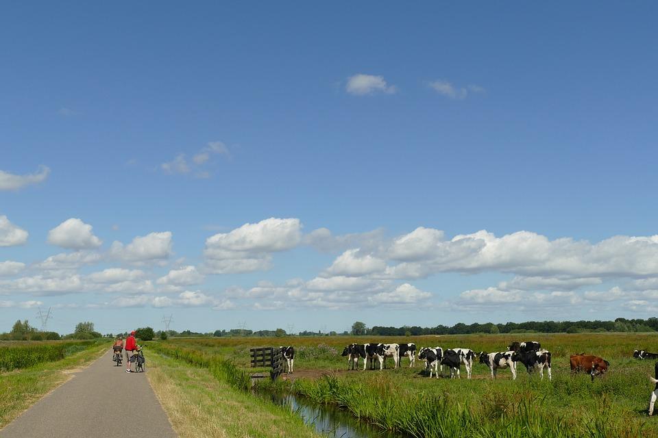 Landscape, Agricultural, Bike Path, Cyclist, Cow