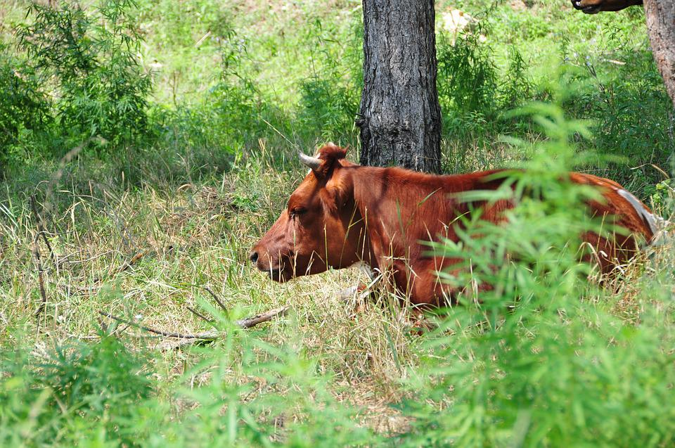 Cow, Nature, Green, Forest