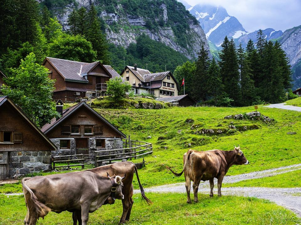 Cow, Mountain, Alpine, Landscape, Nature, Cows, Pasture