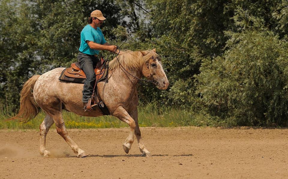 Western Riding, Ride, Cowboy, Riding Course