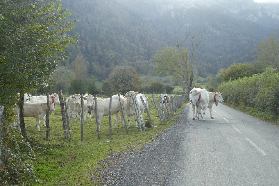 Nature, Landscape, Lawn, Tree, Road, Cows