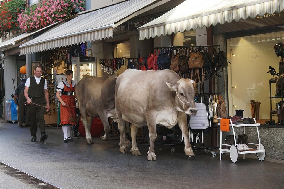 Almabtrieb, Switzerland, Appenzell, Cows, Tradition