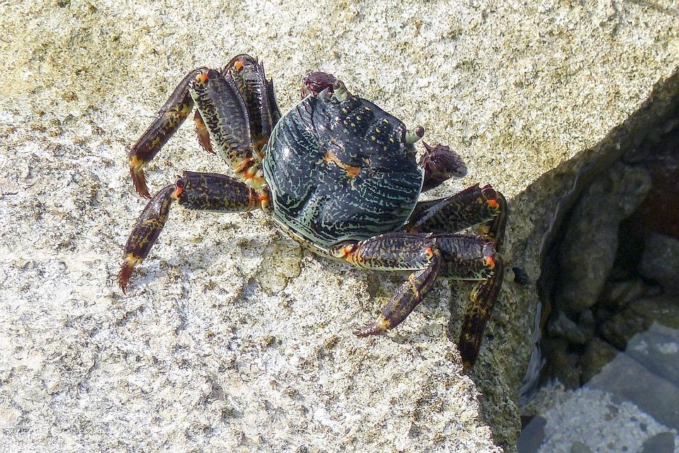 Colorful, Crab, Ocean Life, Sea, Animal, Marine, Ocean