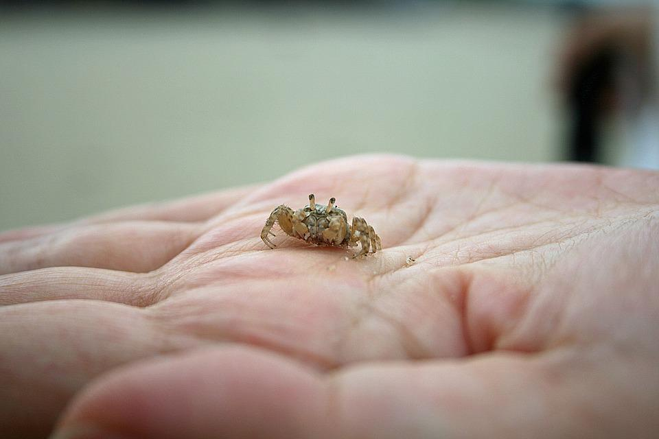 Crab, Hand, Nature, Beach, Marine, Palm, Little, Animal