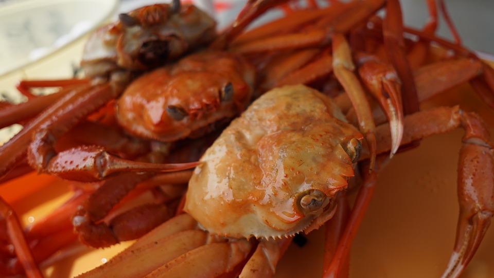 Crab, Snow Crab Chionoecetes Opilio