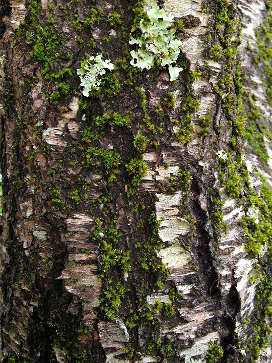 Moss, Tree, Bark, Tree Bark Texture, Wood, Cracks