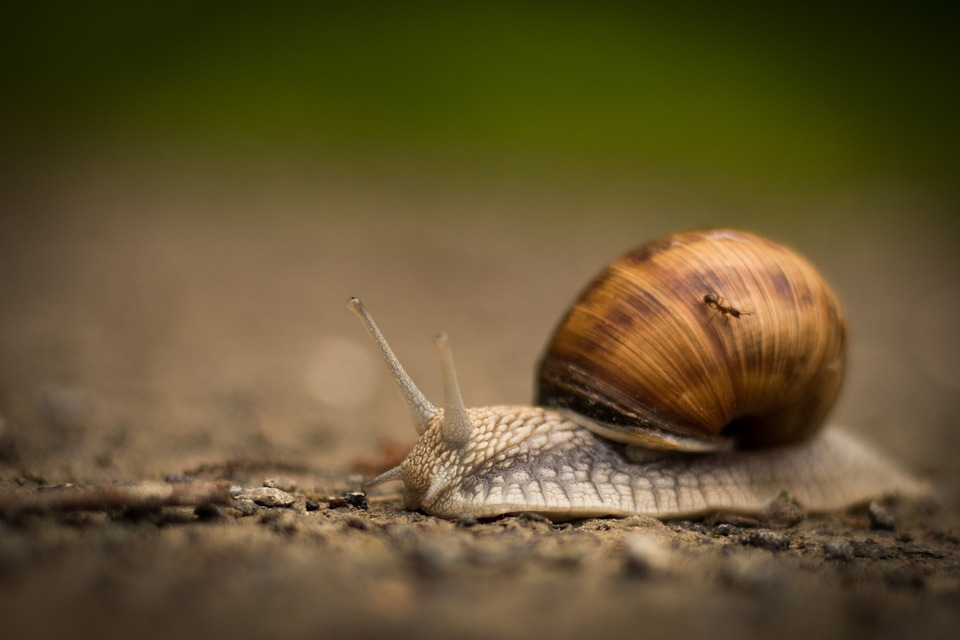 Snail, Nature, Shell, Slowly, Mollusk, Crawl, Probe