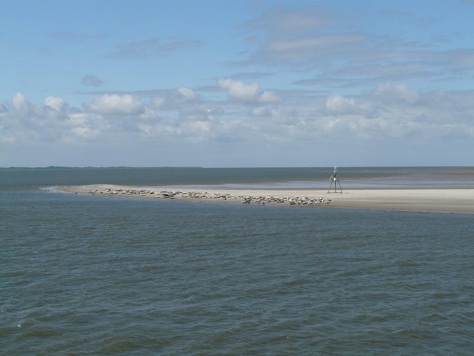 Seals, Phoca Vitulina, Crawl, North Sea, Baltrum