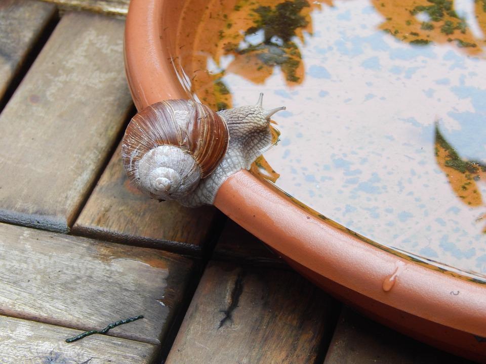 Snail, Shell, Crawl, Slowly, Mollusk, Nature, Reptile