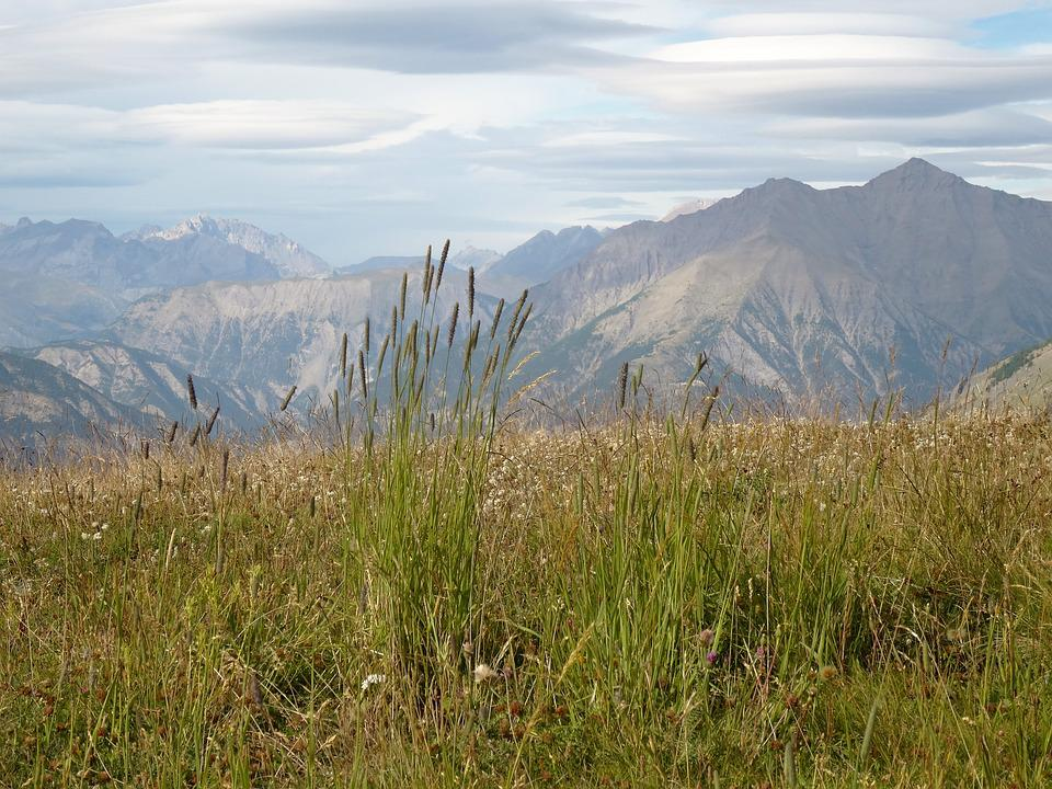 Mountain Scenery, Crazy Herbs, Southern Alps