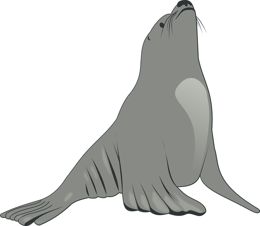 Sea, Lion, Animal, Ocean, Whiskers, Fins, Creature