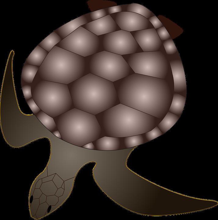 Turtle, Animal, Creature