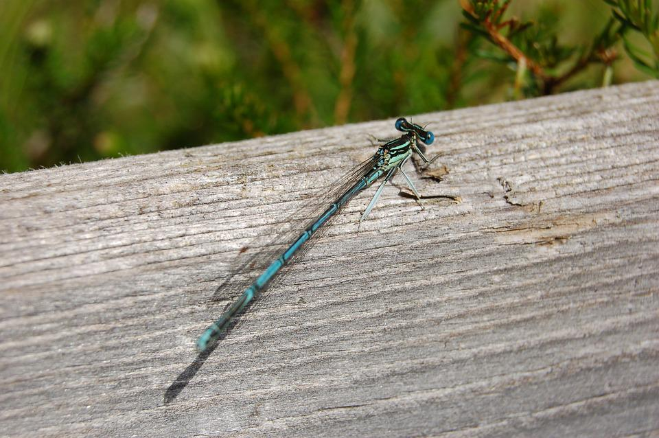 Dragonfly, Nature, Wood, Close, Insect, Creature