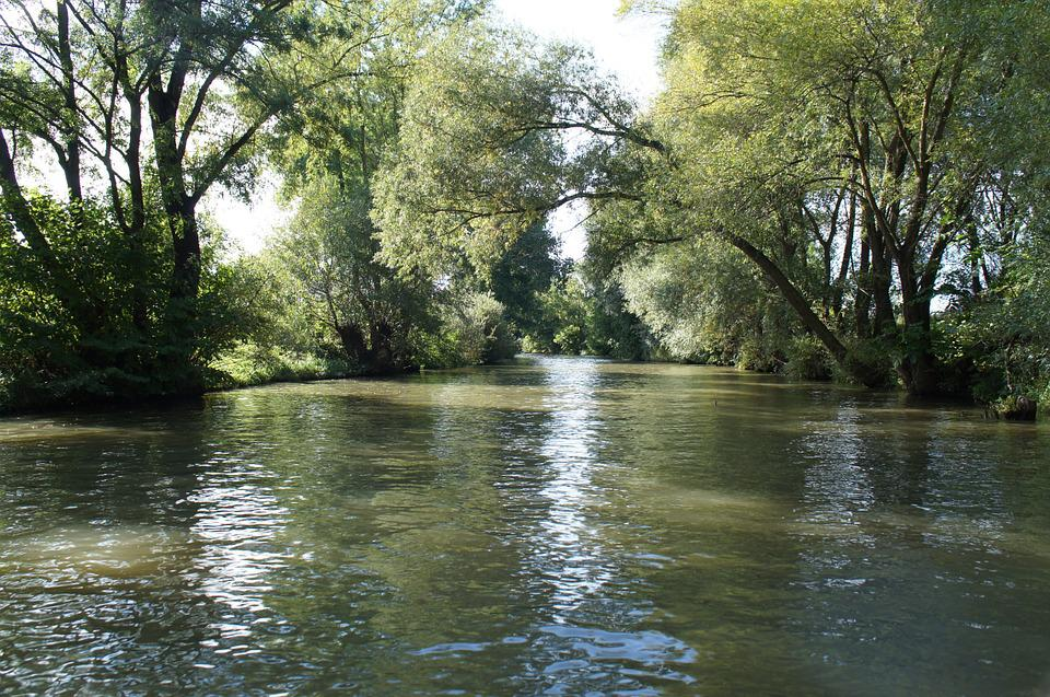River, Nature, Green, Water, Creek, Cruise, Forest