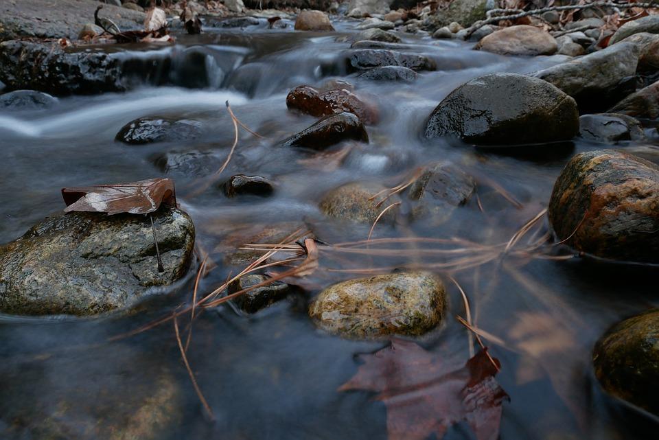 Okanagan, Nature, Fall, Creek, Leaves, Needles, Glisten