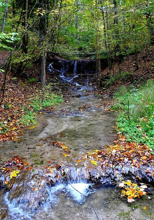 Creek, Bach, Nature, Water Running, Water