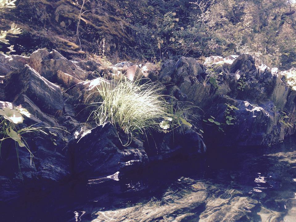 Creek, Water, Forest, Stream, Outdoors, Swimming Hole