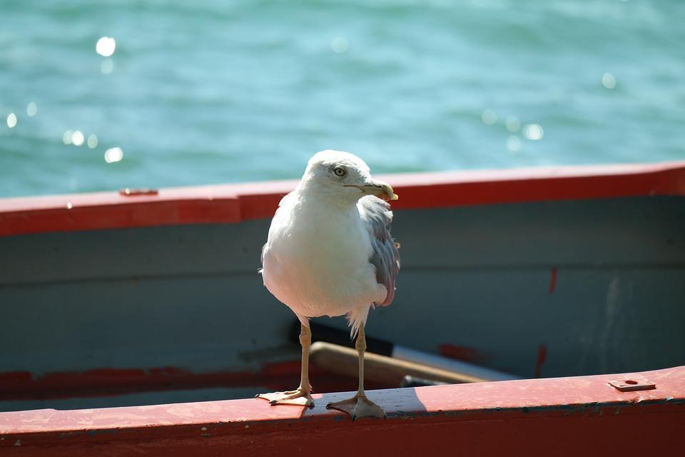 Gull, Boot, Water, Port, Sea, Croatia, Fasana