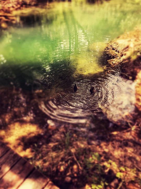 Nature Reserve, Croatia, Swamp, Pond, River, Water