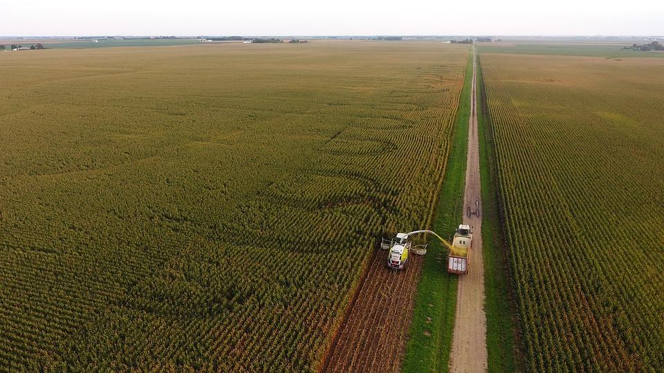 Agriculture, Corn, Farming, Crop, Harvest, Corn Silage