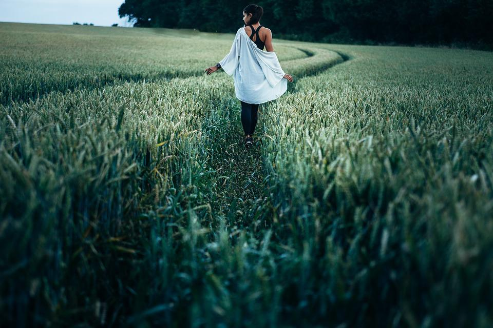 Countryside, Crop, Cropland, Farm, Field, Grass
