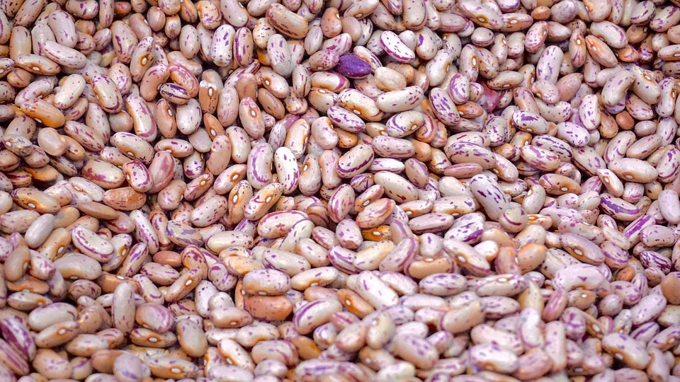 Agriculture, Beans, Close-up, Cooking, Crop, Delicious
