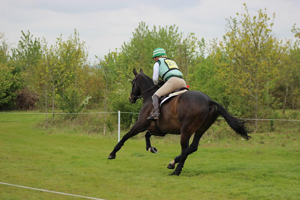 Equine, Cross Country, Horse, Equestrian, Rider