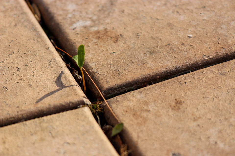 Paving, Bud, Cross, Pattern, Paved, Green, Plant, Crack