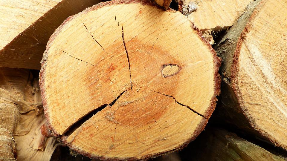 Nature, Wood, Tree, Cut, Cross-sectional, Color, Stere