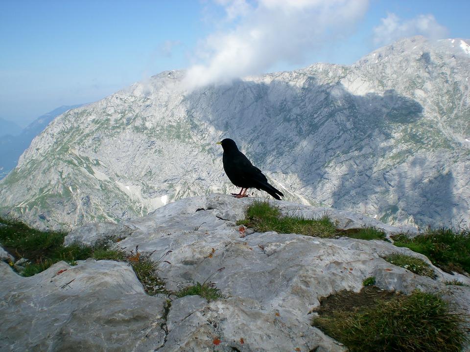 Crow, Bird, Jackdaw, Mountain, Slope, Nature, Snow, Sky