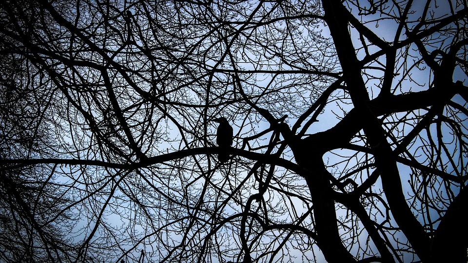 Crow, Natural, Mysterious, Bird, Wood