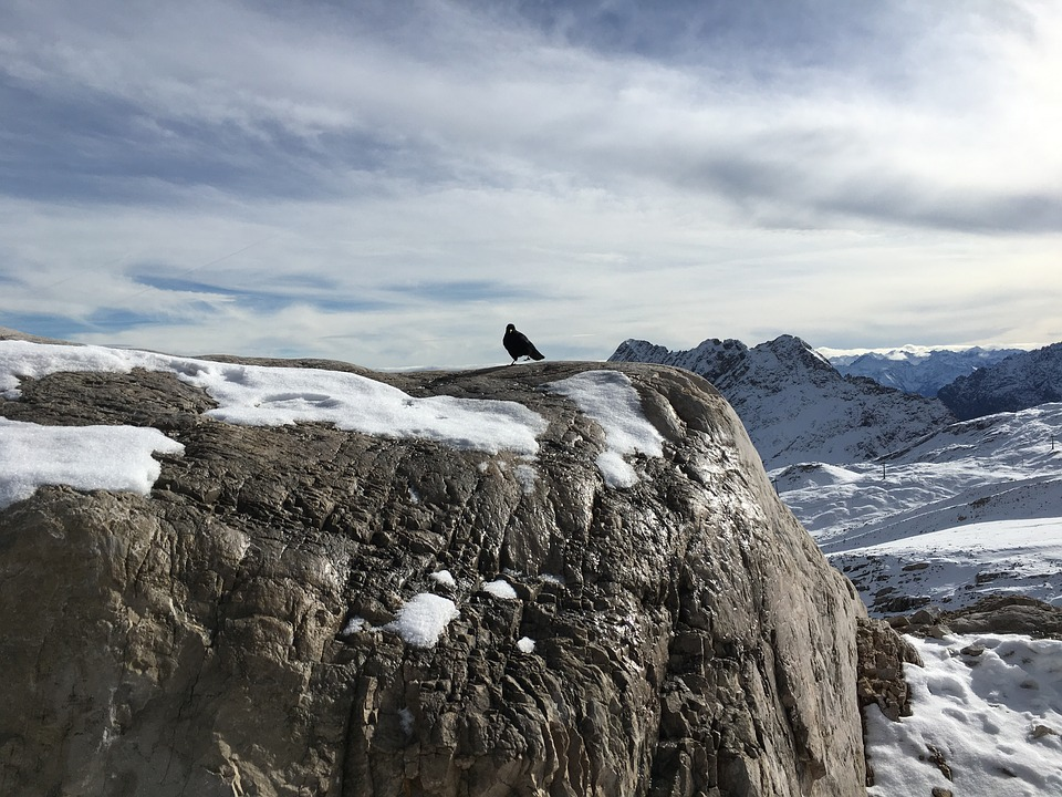 Rock, Snow, Zugspitze, Crow, Raven, Bird, Nature