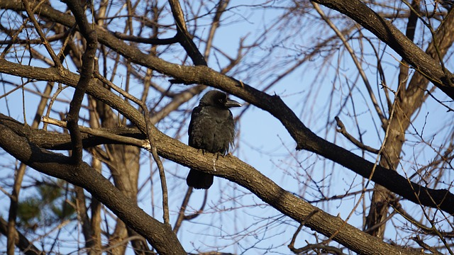 Wood, Nature, Outdoors, New, Crow