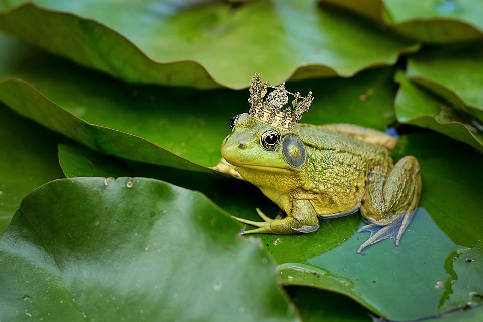 Bull Frog, Green, Pond, Lily Pad, Frog Prince, Crown