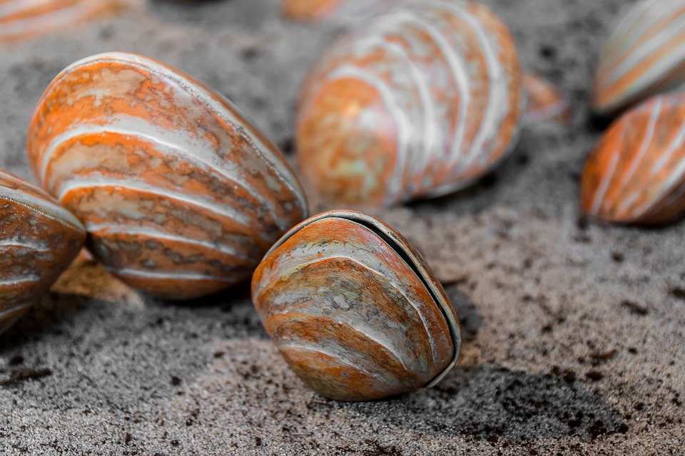 Shells, Crustaceans, Marine, Sea, Seashell, Sand, Beach