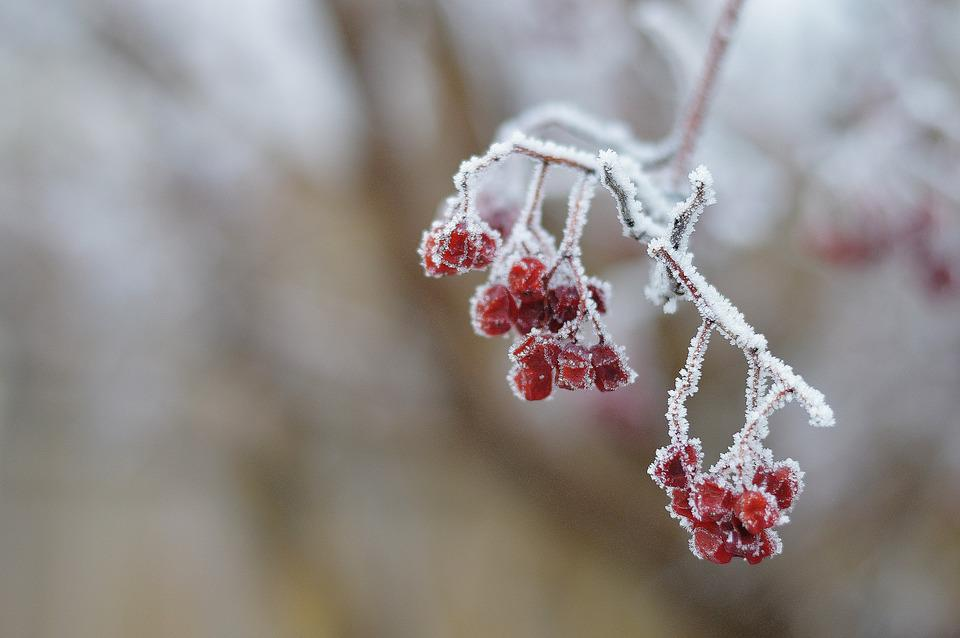 Hoar Frost, Winter, Frost, Tree, Cold, Icy, Crystal