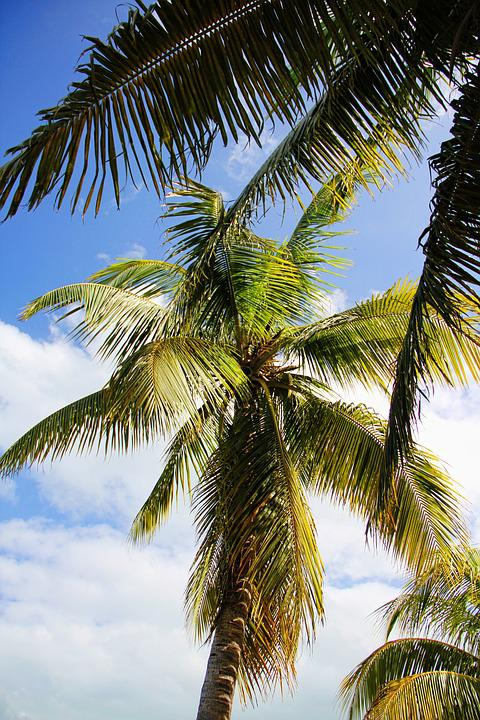 Caribbean, Cuba, Palm, Holiday, Tropical, Sky