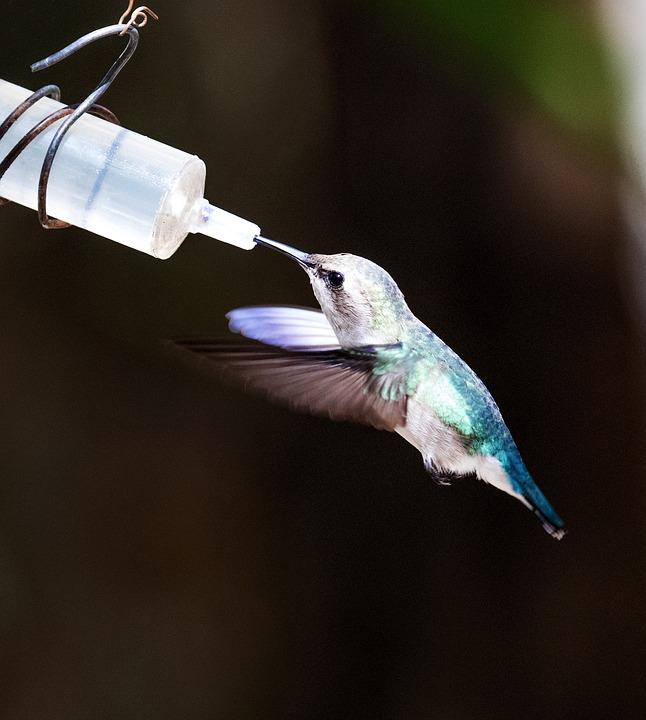 Cuba, Matamzas, Cienaga De Zapata, Hummingbird