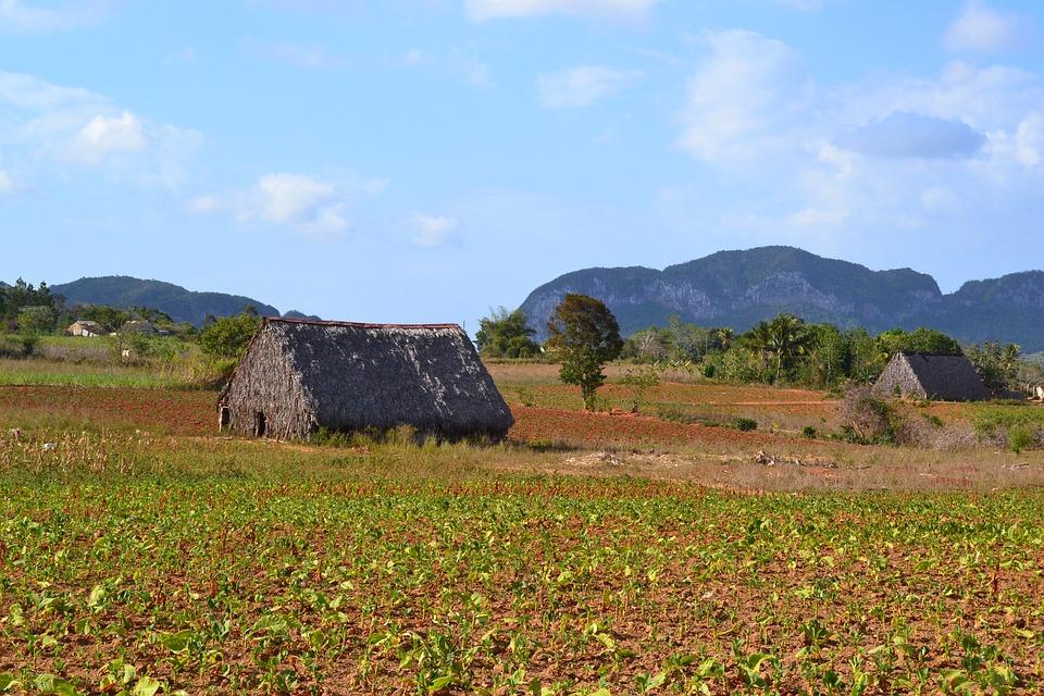 Cuba, Viñales Valley, Finca, Nature, Tobacco, Landscape