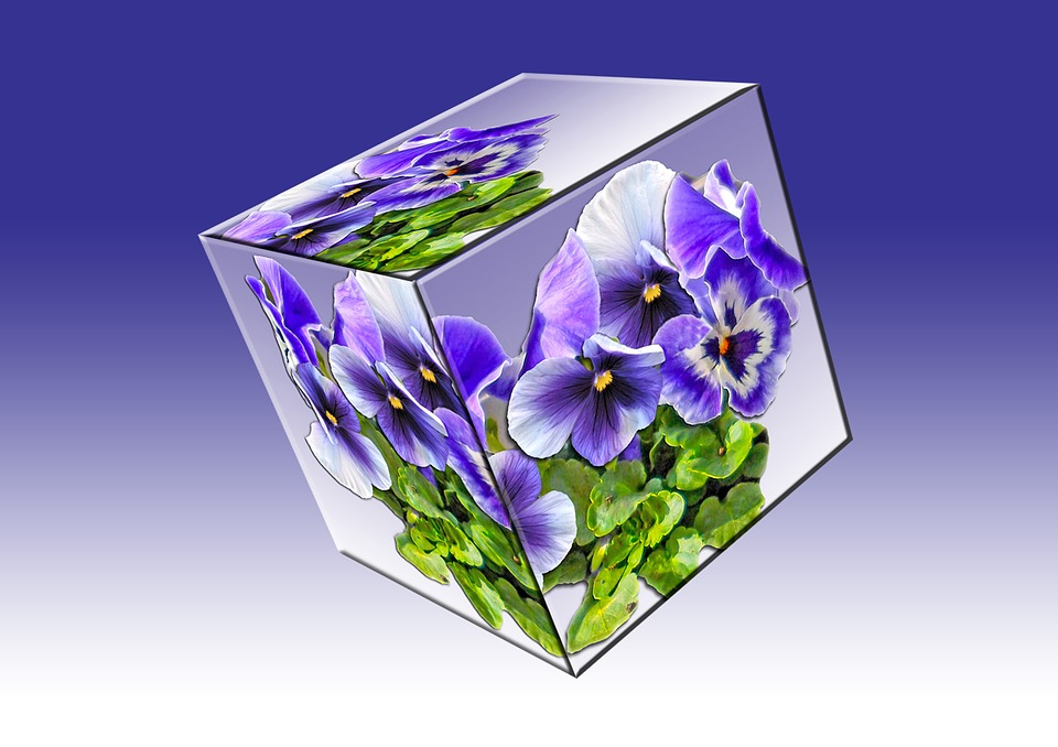 Cube, Floral Cube, Pansy, Plant, Violet, Garden Pansy
