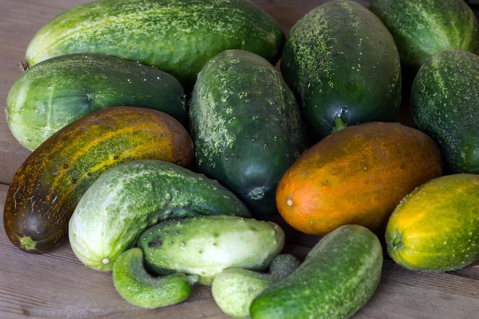 Vegetables, Cucumbers, Garden Cucumber