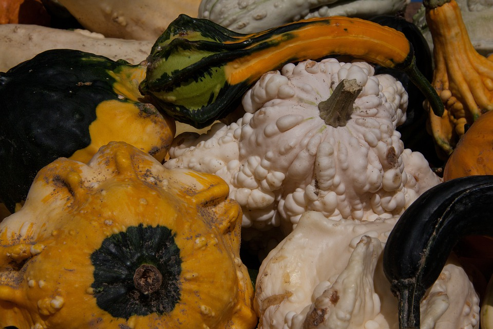 Decorative Squashes, Cucurbita, Cucurbitaceae, Colorful