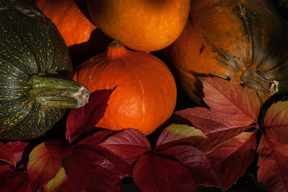 Kabocha, Cucurbita Maxima, Pumpkins, Cucurbitaceae