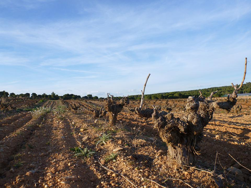 Vineyard, Cuenca, Wine Grape, Agriculture, Spain, Wine