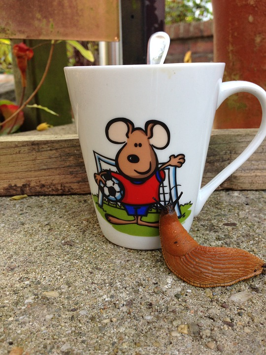 Coffee, Cup, Snail